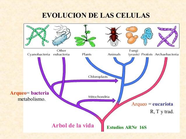 Teoria de Evolucion Quimica Evolución Química Moléculas