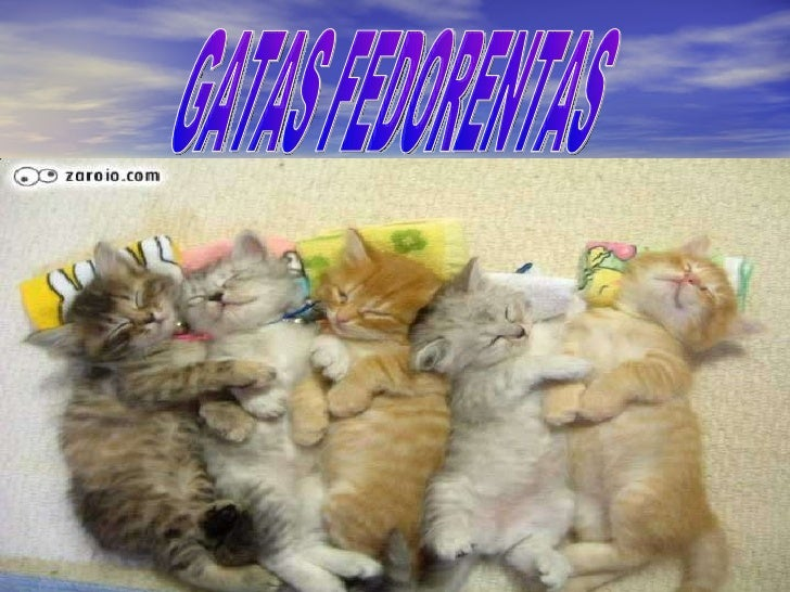 GATAS FEDORENTAS