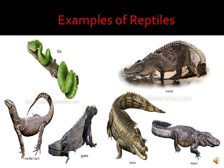 Examples of Reptilesbr...