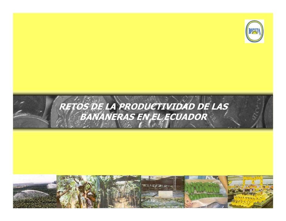 RETOS DE LA PRODUCTIVIDAD DE LAS     BANANERAS EN EL ECUADOR