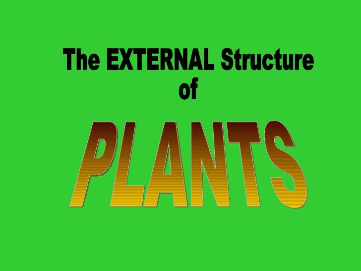 The EXTERNAL Structure of PLANTS