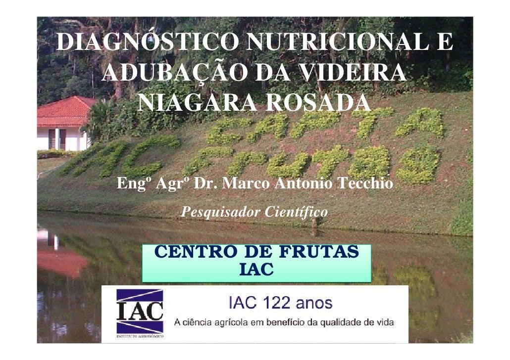 DIAGNÓSTICO NUTRICIONAL E    ADUBAÇÃO DA VIDEIRA      NIAGARA ROSADA      Engº Agrº Dr. Marco Antonio Tecchio            P...
