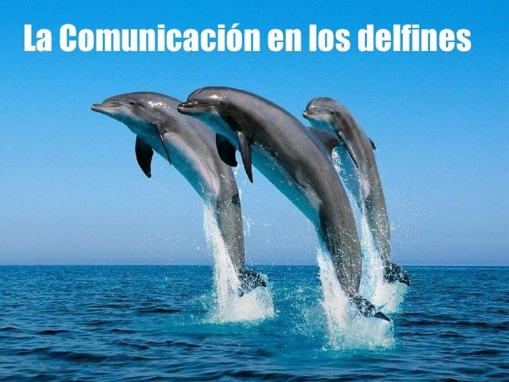 La Comunicación en los delfines