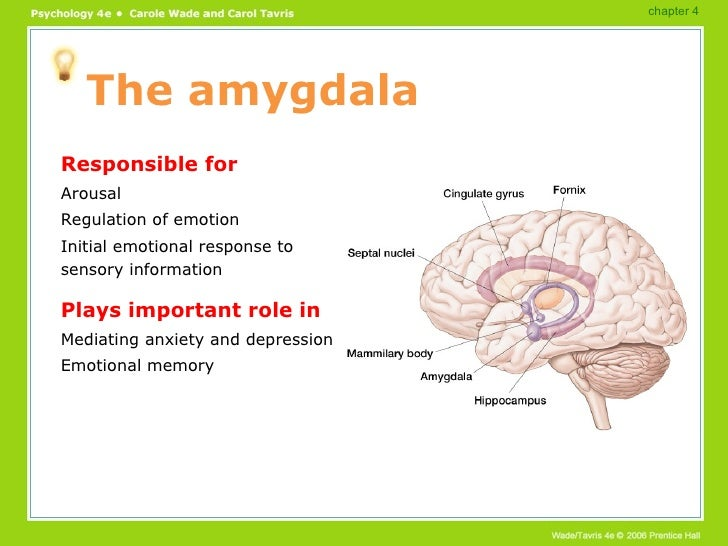 role of amygdala in the experience of fear A new neuropsychological study of a rare patient provides novel evidence that amygdala lesions can virtually abolish the experience of fear, illuminating neurobiological mechanisms of fear experience.