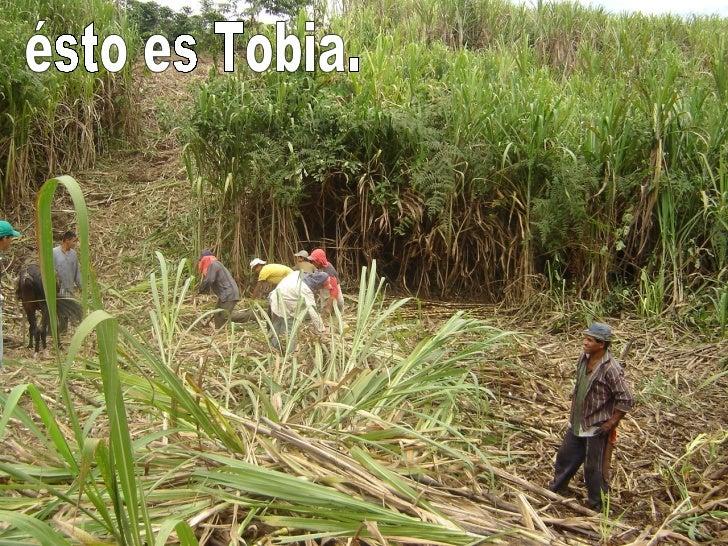 ésto es Tobia.
