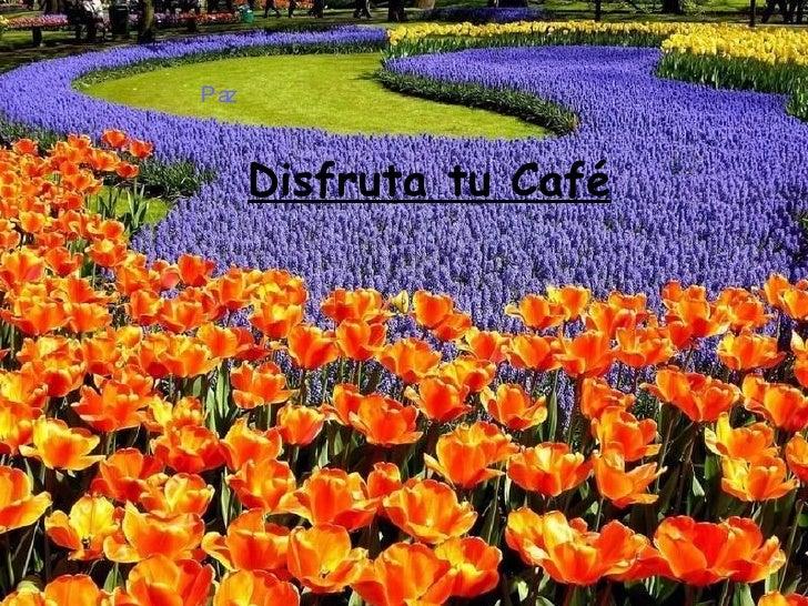 Disfruta tu Café Paz