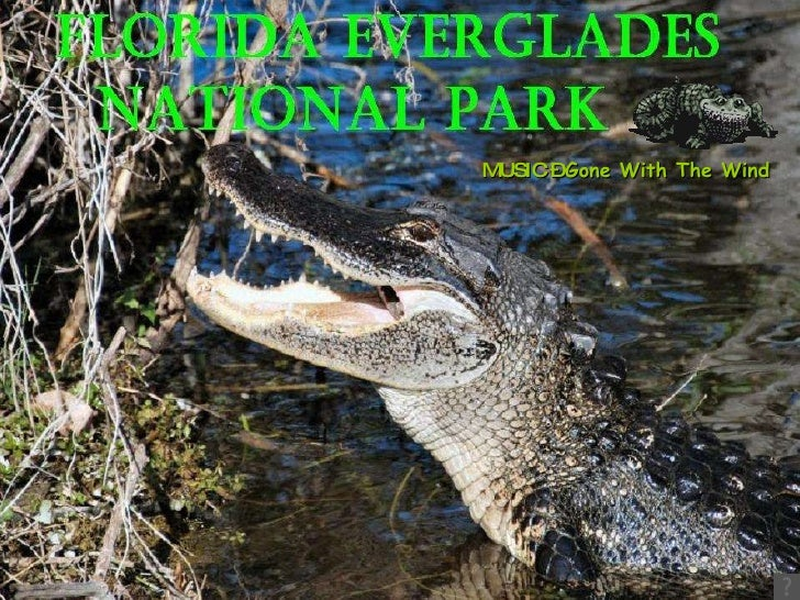 Florida Everglades National Park