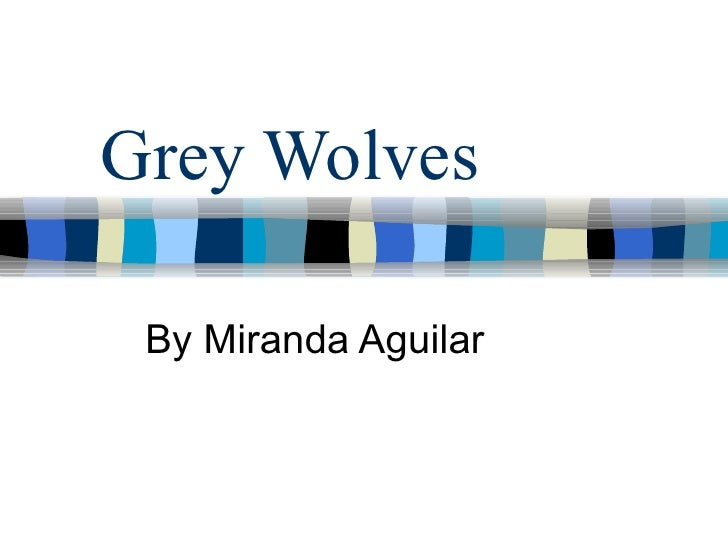 Grey Wolves By Miranda Aguilar