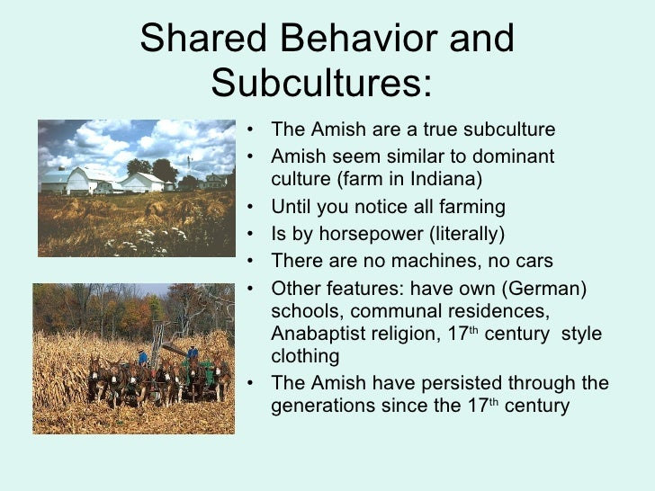 a essay of amish the group of religious people How do the amish differ from mormons update do amish have jokes for very strict groups of amish ask new (of course there are rude lds and amish people.