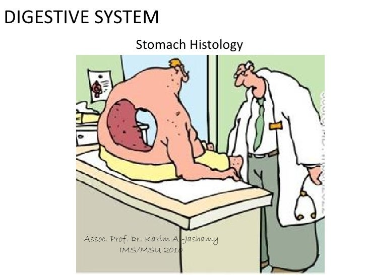 C:\Documents And Settings\User\Desktop\Stomach Histology