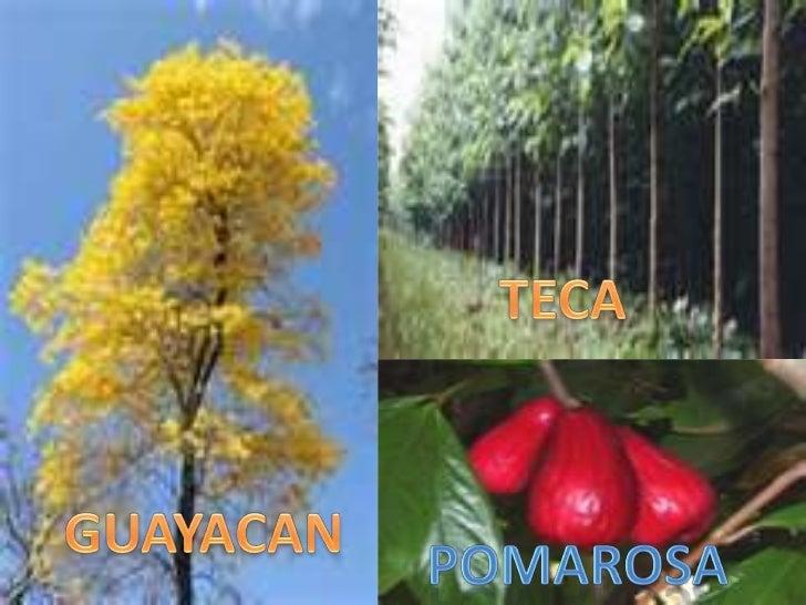 Fauna y flora del ecuador for Plantas ornamentales del ecuador