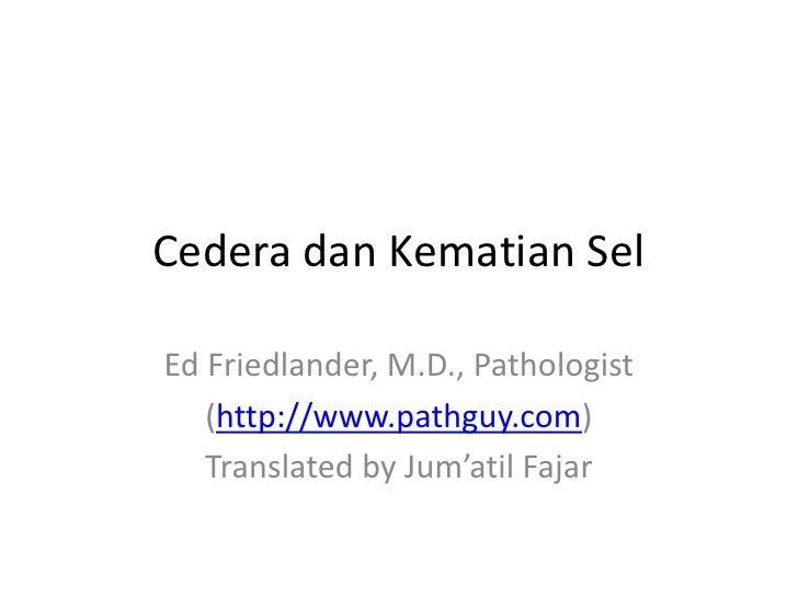 Cedera dan Kematian SelEd Friedlander, M.D., Pathologist   (http://www.pathguy.com)   Translated by Jum'atil Fajar