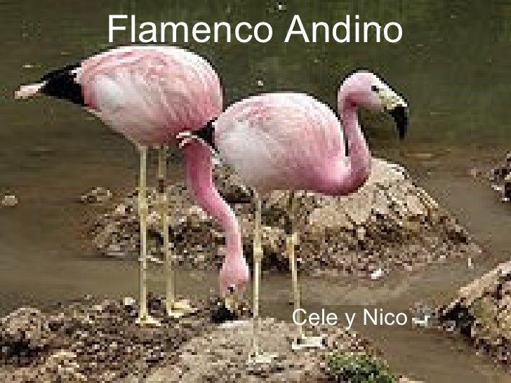 Flamenco Andino   Cele y Nico