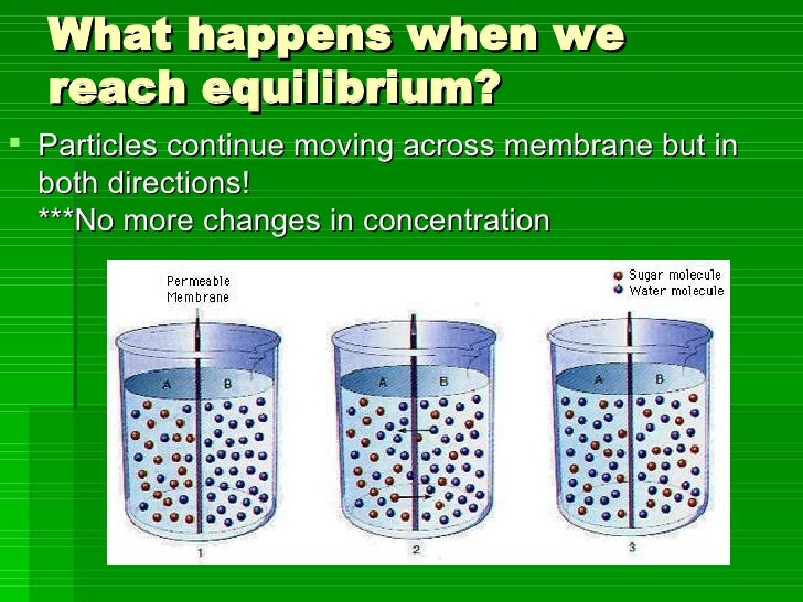 What happens when we reach equilibrium? <ul><li>Particles continue moving across membrane but in both directions! ***No mo...