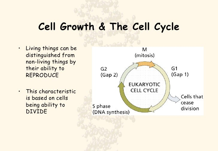 Cell Growth & The Cell Cycle <ul><li>Living things can be distinguished from non-living things by their ability to REPRODU...