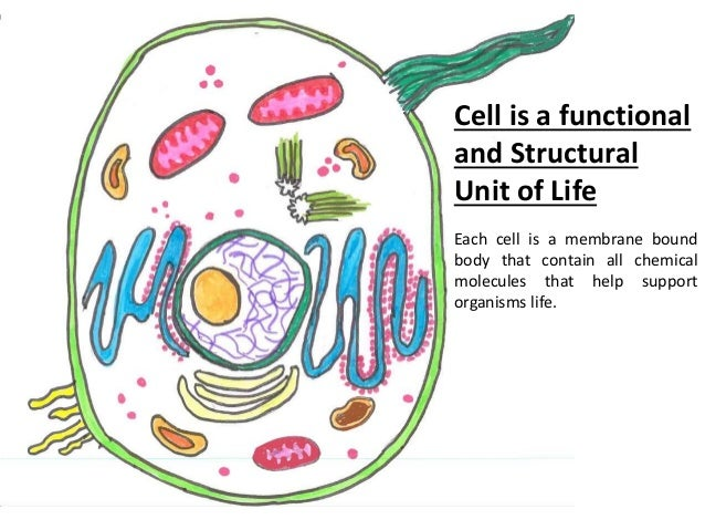 the basic unit of life Chapter 3—cells: the basic units of life multiple choice 1 human beings are a machines c organisms b systems d protists ans: c 2 one benefit of being a large organism is that you.