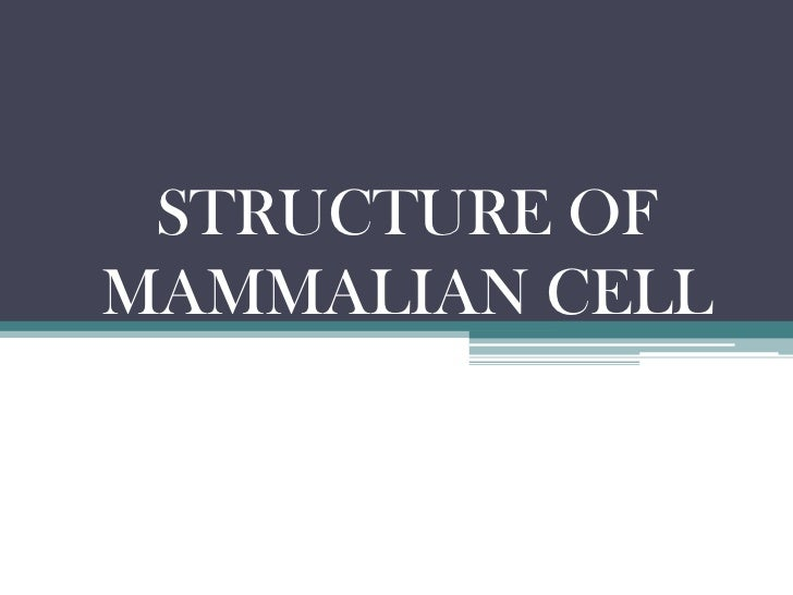 STRUCTURE OFMAMMALIAN CELL