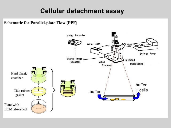 Cell Adhesion Assay