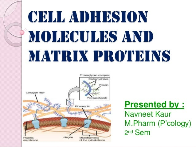 Cell adhesion molecules and matrix proteins Presented by : Navneet Kaur M.Pharm (P'cology) 2nd Sem