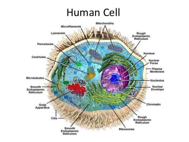 Image result for Cell Biology | Introduction To Cell