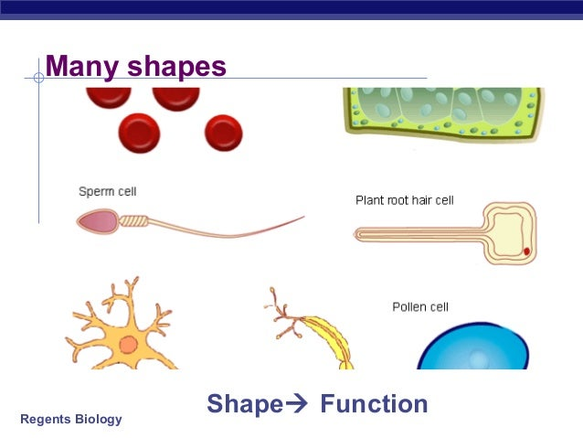 Introduction To Cell Biology And Stem Cells