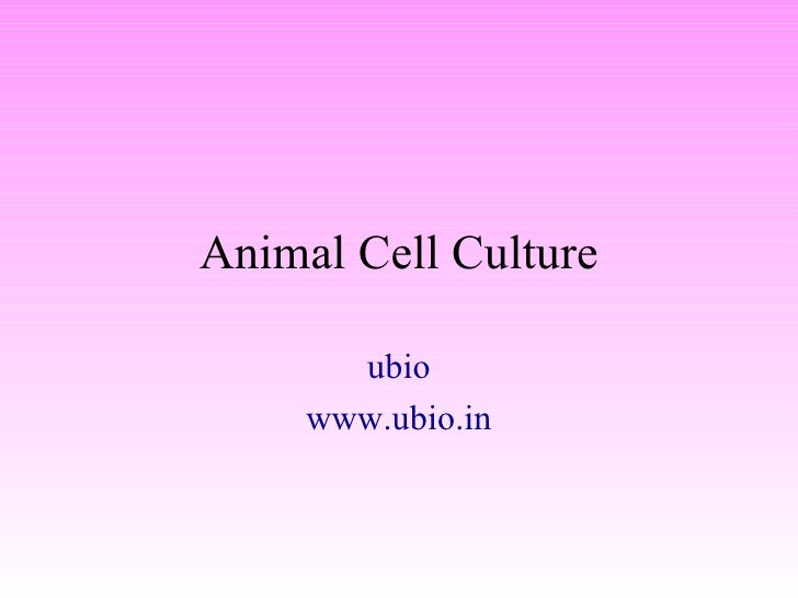 Animal Cell Culture ubio www.ubio.in