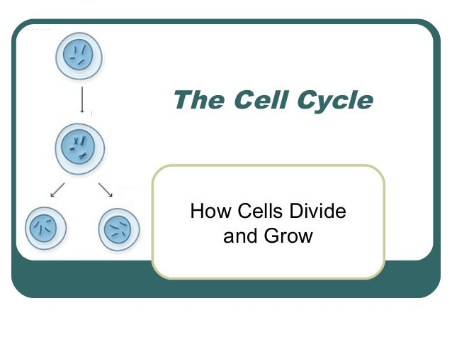 The Cell Cycle How Cells Divide   and Grow
