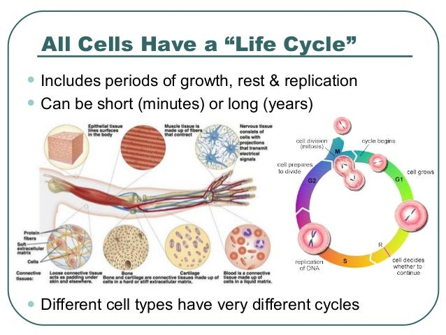 ap biology cell cycle essay Ap biology essays cell cycle whenever you feel that your essay misses something, you can send us a free revision request, and your writer will provide all the corrections.