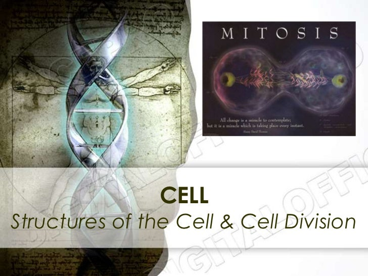 CELLStructures of the Cell & Cell Division