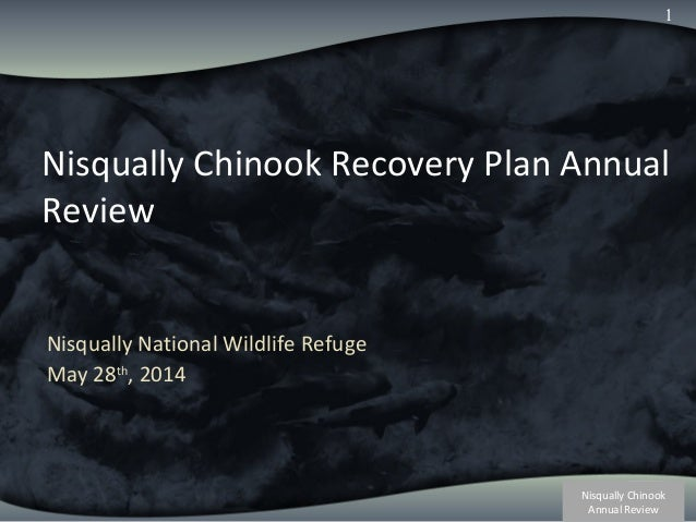 Nisqually Chinook Annual Review 1 Nisqually Chinook Recovery Plan Annual Review Nisqually National Wildlife Refuge May 28t...