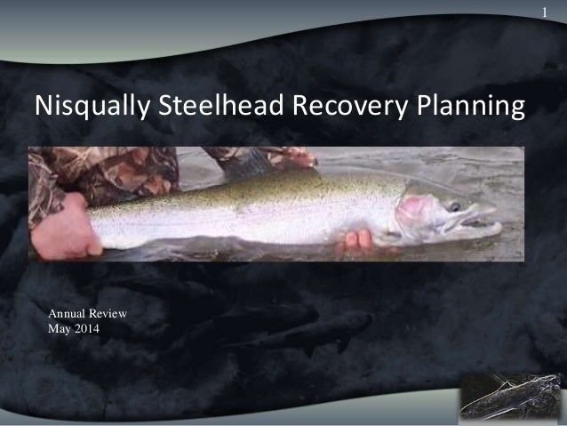 Nisqually Chinook Annual Review Nisqually Steelhead Recovery Planning 1 Annual Review May 2014