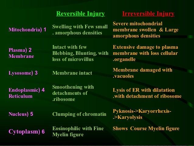 Reversible Injury          Irreversible Injury                                          Severe mitochondrial              ...