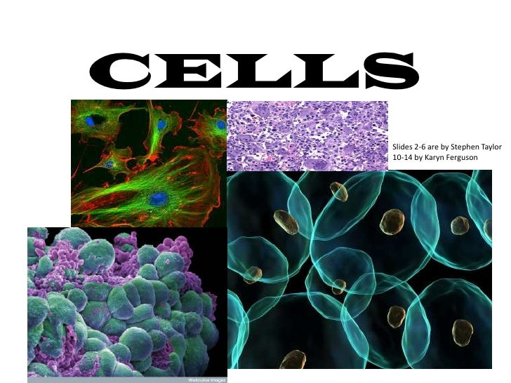 CELLS    Slides 2-6 are by Stephen Taylor    10-14 by Karyn Ferguson