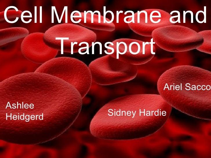Cell Membrane and Transport Ariel Sacco Ashlee Heidgerd Sidney Hardie