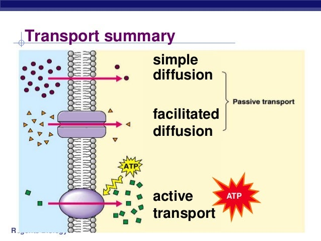 Diffusion Vs Active Transport Venn Diagram Wiring Diagram