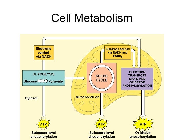 celluar metabolism Cellular metabolism refers to the all chemical reactions that occur in cells that  capture and release energy in order to sustain life.