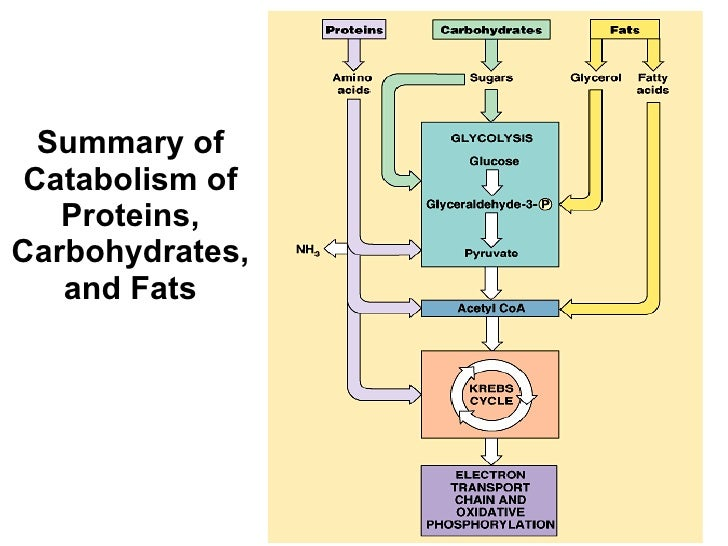 anabolic process carried out by plants