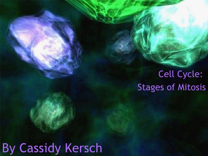 Cell Mitosis Project- Digital Immersion