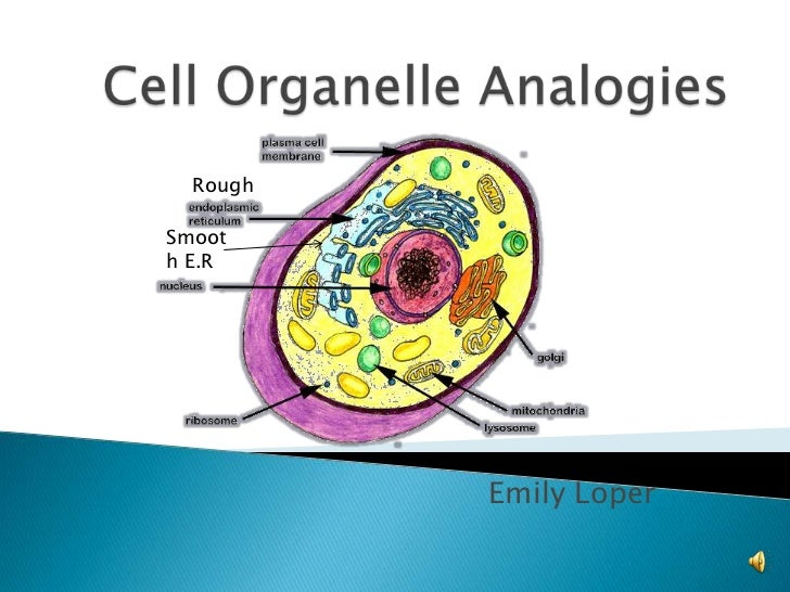 Cell Organelle Analogies<br />Rough<br />Smooth E.R<br />Emily Loper<br />