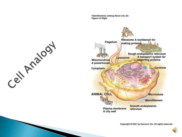 Cell analogy essays