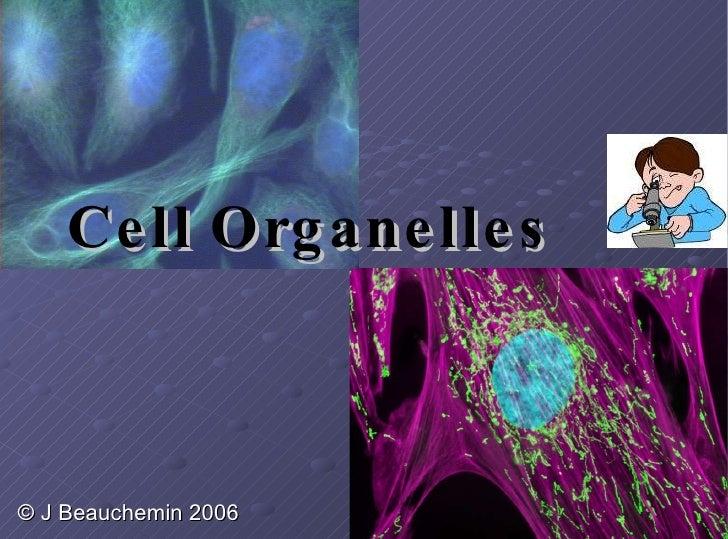 Cell Organelles © J Beauchemin 2006