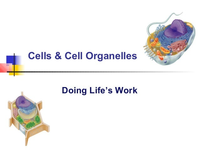 Cell organelles2012