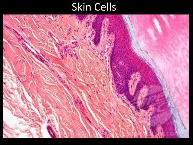 Cell photos