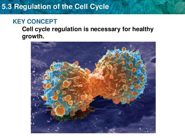 Cell regulation cancer 5.3