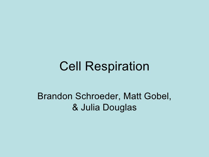 Cell Respiration Brandon Schroeder, Matt Gobel, & Julia Douglas