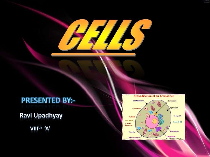 CELLS<br />Presented By:-<br />Ravi Upadhyay<br />VIIIth  'A'<br />