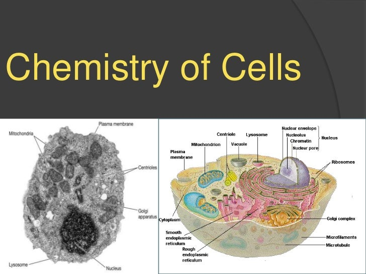 Chemistry of Cells<br />