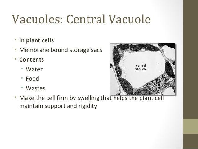 Central Vacuoles