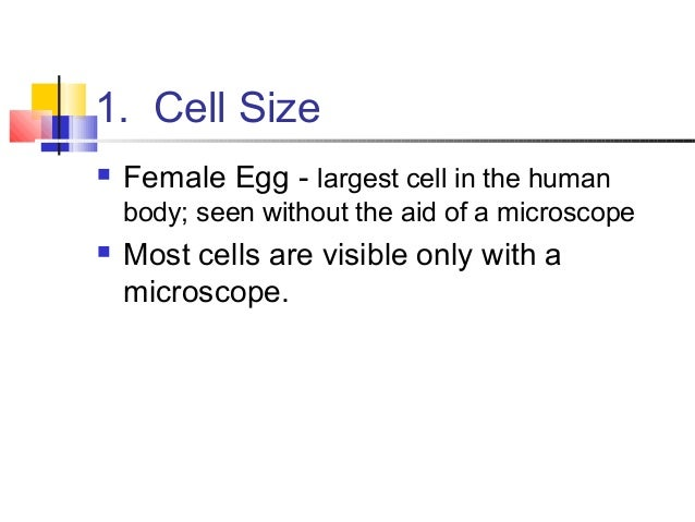 Human egg size
