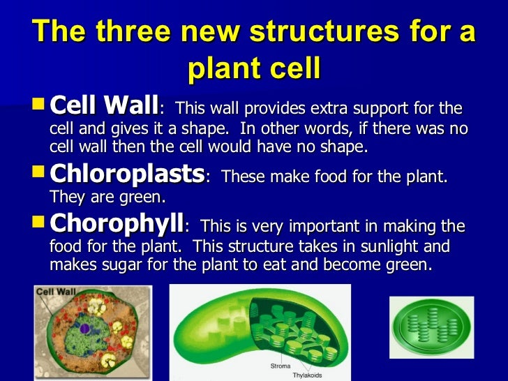 short essay animal cell Here is your short paragraph on cell theory the plant body consists of a number of small, microscopic, box-like compartments called cells in other words, the cells.
